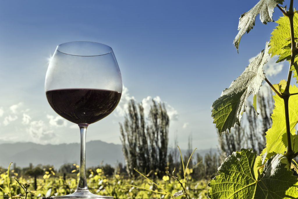 Forefront of a glass of red wine, as a background, the vineyard and the Andes. Casablanca, Chile.